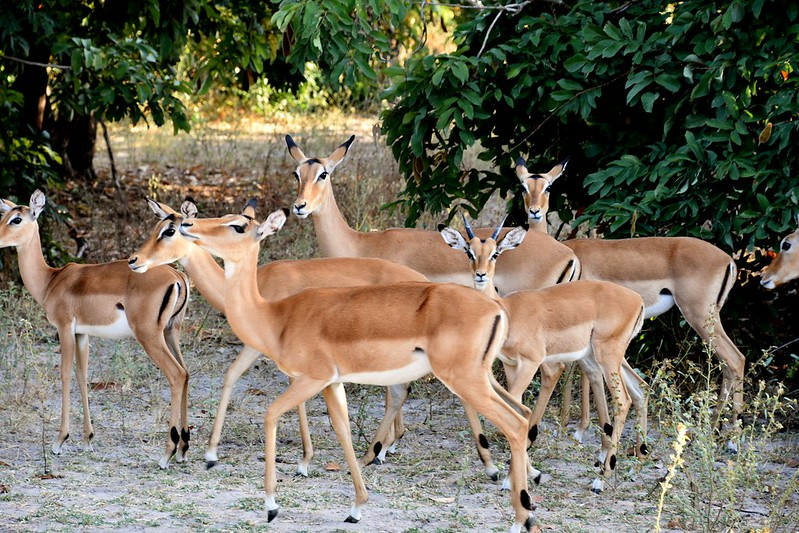 photo safaris