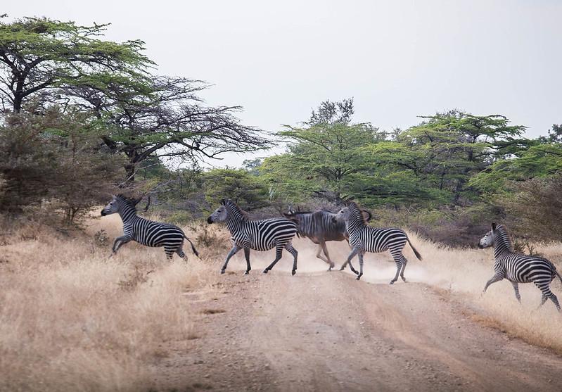 safari in nyerere