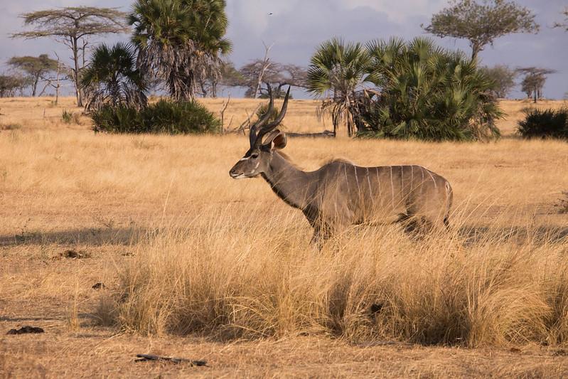 selous wildlife animals